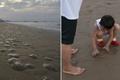 山东烟台大量海蜇搁浅金沙滩 密密麻麻星罗棋布