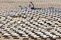 世界最高太阳能塔建成 竟装5.5万面镜子