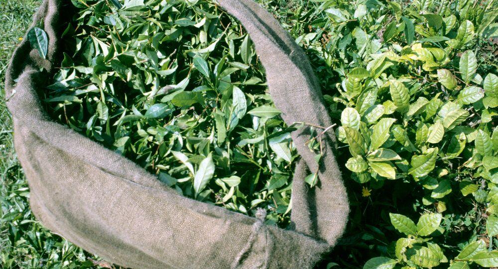 日本科学家:常饮用绿茶可预防动脉破裂