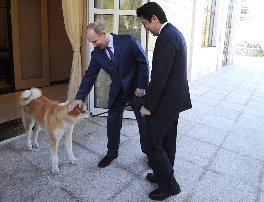 动物的俄罗斯总统普京