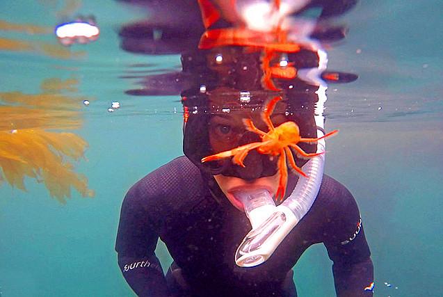 """美潜水员遇螃蟹""""调戏"""" 画面逗趣"""