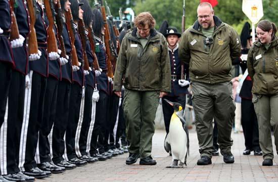 挪威企鹅准将佩勋章检阅部队