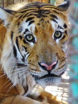 巴勒斯坦动物园因战火荒废 动物终获救
