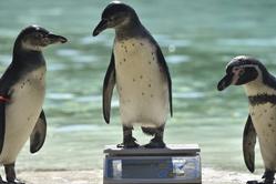 伦敦动物园举行年度体测 万余动物亮相