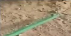 沙漠最强伪装高手 浮出沙土