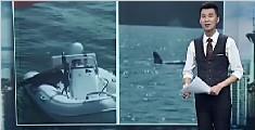 海豹为躲虎鲸捕食跳上观鲸船