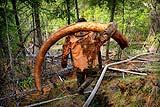 俄海盗非法挖掘猛犸象牙化石