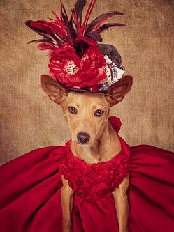 美摄影师为流浪狗拍另类写真促进收养