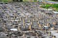 """上海一项目烂尾逾十年 千根水泥柱如""""墓地"""""""
