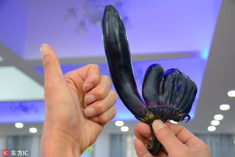 """吉林市民买到畸形连体茄子 形似""""点赞"""""""