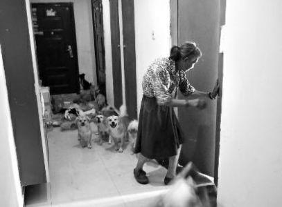 78岁老太与40多条流浪狗生活追踪:反悔拒绝搬家