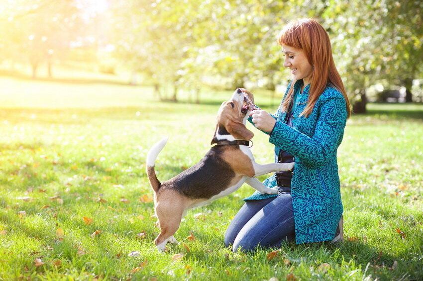 匈牙利科学家证实狗能听懂人类的语言
