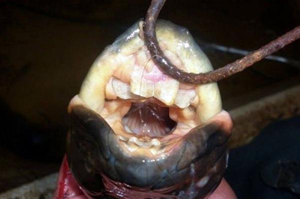 阿根廷捕获奇特三眼怪鱼 网友直呼太丑