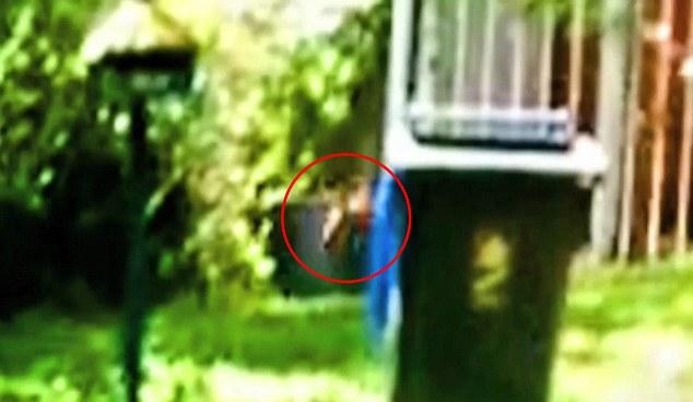 澳大拉亚动物爱好者称在自家后院拍到袋狼