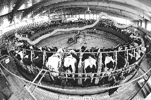 原奶价格暴涨暴跌 奶业周期性波动困境待解