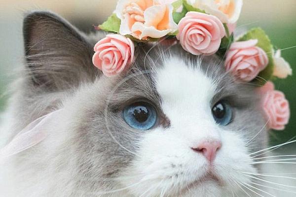 瑞典一猫咪被当公主养 穿芭蕾舞裙戴水晶王冠