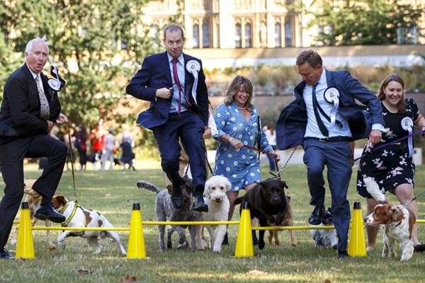 """英国议员携爱犬参加""""威斯敏斯特年度狗狗""""大赛 场面逗乐"""