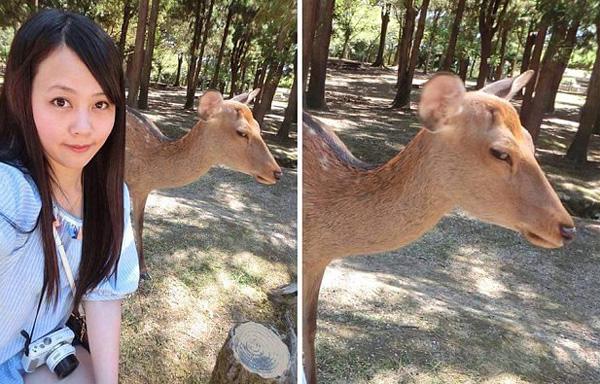 台湾游客日本奈良与小鹿合照遭其斜眼爆红网络