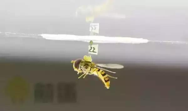 飞行中的苍蝇如何分辨上下?