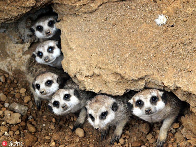 小动物们的团圆全家福