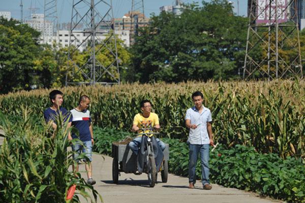 """探访北京""""世界最贵玉米地"""" 坐落三环地价难估"""