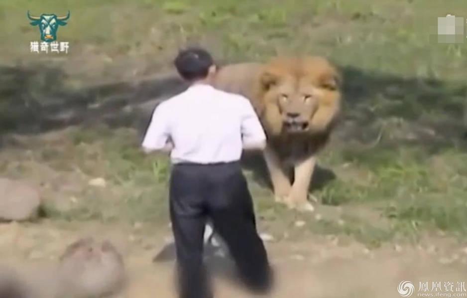 """台男子吸毒后跳入狮子坑大喊""""来咬我啊"""" 结果被咬"""