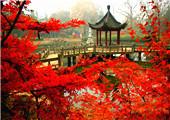 盘点国内外最美赏枫地!没有红叶的秋天不完整