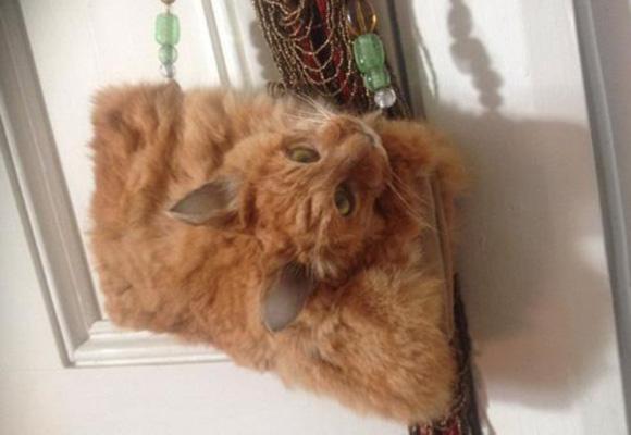 新西兰网站拍卖猫咪标本手提包 起价1400美元
