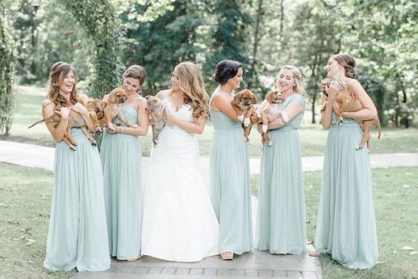 有新意!美新婚夫妇婚礼现场用幼犬替代鲜花