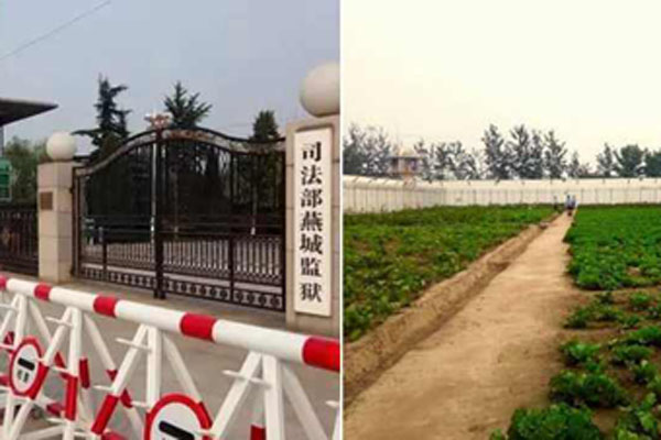 探访燕城监狱:蔬菜自己种 午餐两菜一汤