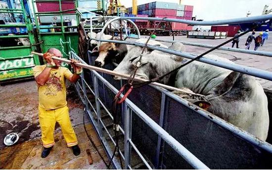 12年前因疯牛病被禁 美国牛肉为何重返中国餐桌?