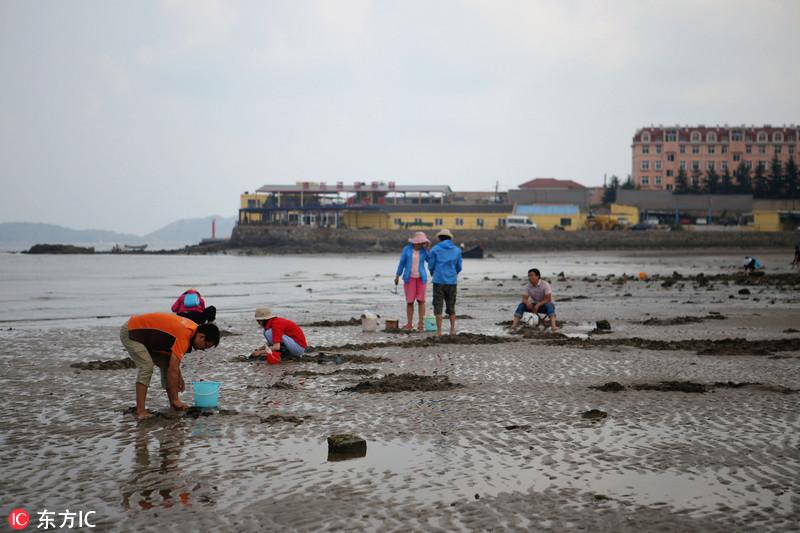 青岛市民秋季赶海收获满满 挖海鲜技巧精妙令人赞叹