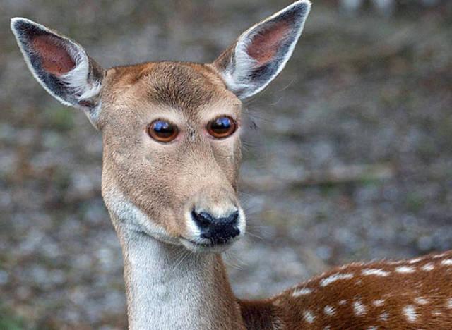 如果动物的眼睛长在正面.