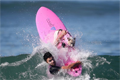 加州狗狗冲浪比赛