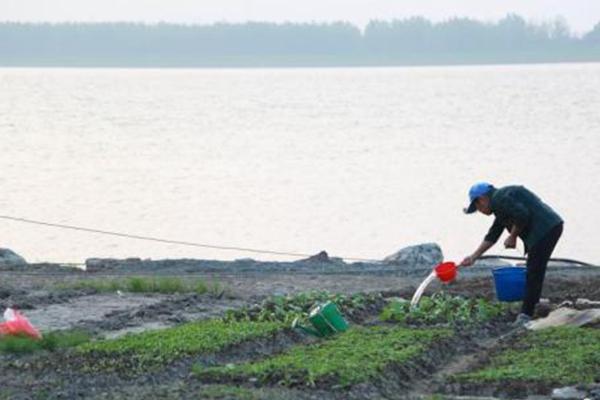 """鄱阳湖水位骤降 裸露岸堤变身""""开心农场"""""""