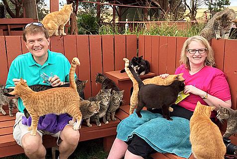 猫奴天堂:夏威夷猫咪收容所养500只猫