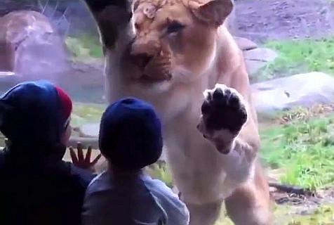 视频:萌娃与宠物的搞笑互动