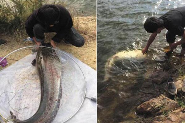 男子钓上60斤大鲶鱼 不忍吃放生