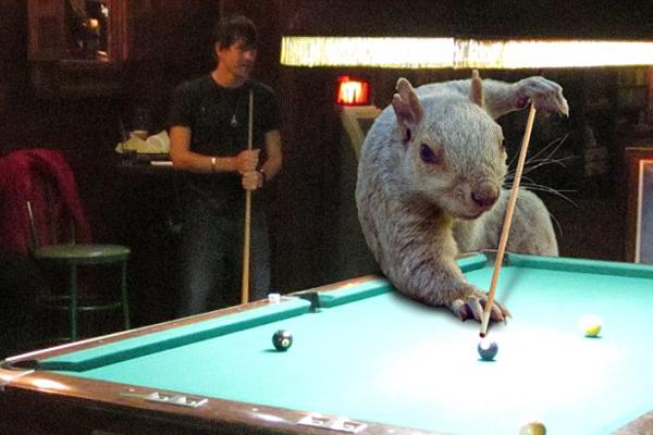 P图比赛欢乐多:小松鼠变身各种角色