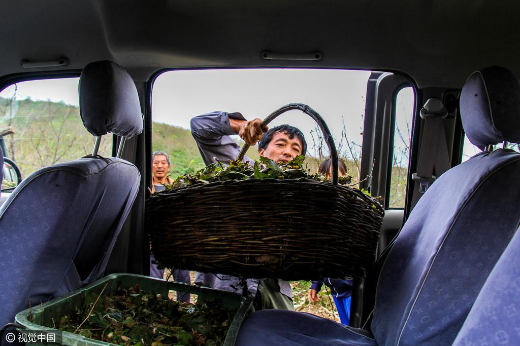 七旬老人蜗居山中一月 看守柞蚕林为儿孙守财