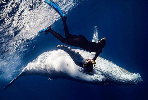 印度洋座头鲸与潜水员深海同游