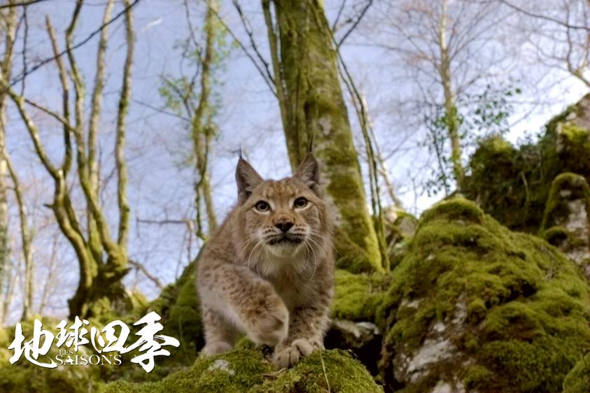 《地球四季》获赞 世界级自然电影口碑爆棚