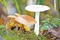 长白山 秋风吹来遍地蘑