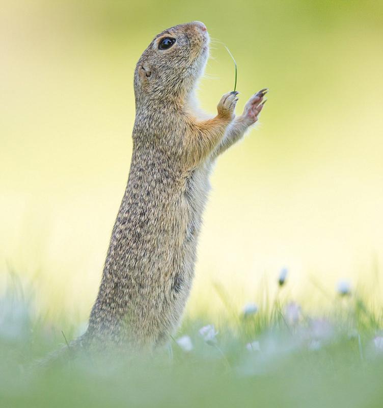 奇趣野生动物摄影赛作品公开 爆笑不止