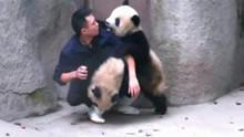 大熊猫和饲养员杠上了 吃个药至于么