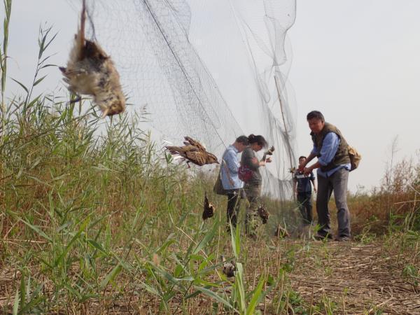 天津唐山现万米非法捕鸟