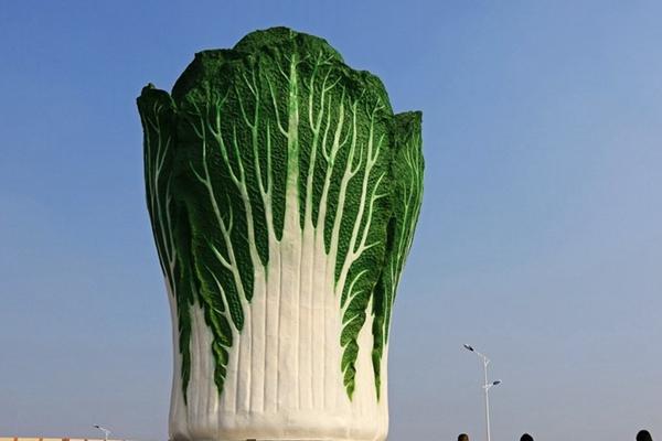 河南建高19米白菜雕塑引市民参观拍照
