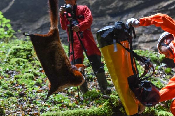 陕西探险队员在巨型天坑内救助一只罕见飞猫