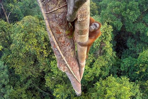 英国年度最佳野生动物摄影师绝美作品