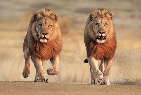 艺术家创作非洲野兽画像 精致细腻
